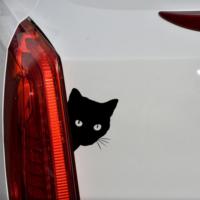 cicás matrica fekete macska